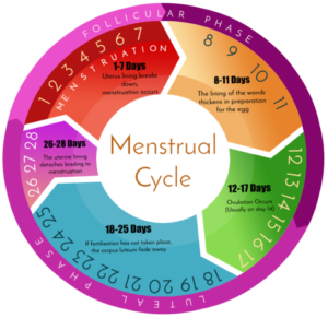 Ovulation: Things to know about menstrual cycle